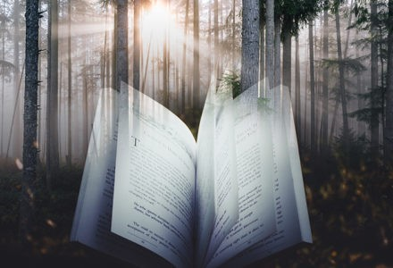 A book floats in a dark forest with sunlight just breaking through the trees.